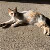 野良の三毛と4月に生まれた子猫の里親募集中
