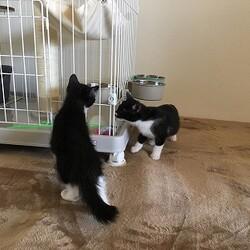 2匹の子猫が里親様のところへ!