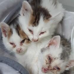 保護猫活動を始めました