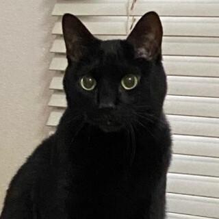 優しい黒猫、ミカちゃん♪