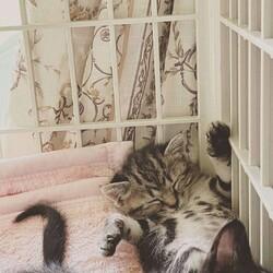 おきなわ美ら仔猫❤譲渡会 in 緑区 サムネイル2