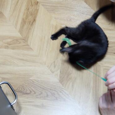 猫キックかわいすぎます