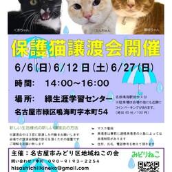 名古屋市緑区猫の譲渡会 サムネイル1