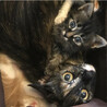 穏やかで賢く優しいママとその子猫ペア