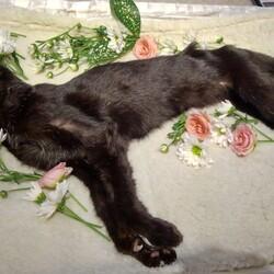 我が家のじっちゃん猫・最終話