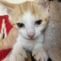 【つるぎ】猫大好きで後追いする茶白子猫