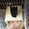 なれなれの甘ちゃん黒猫♡こえだちゃん1ヵ月半 サムネイル3