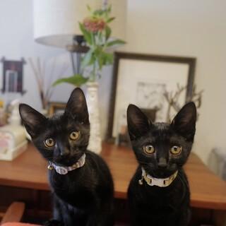 黒猫兄妹♪2か月です
