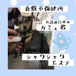 「20201年6月8日の倉敷→全頭譲渡決定!」サムネイル2