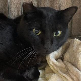1歳 黒猫 穏やかなそうくん