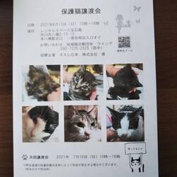 市川市地域猫活動団体ウイング譲渡会開催