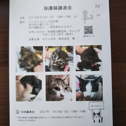 6/13市川市地域猫活動団体ウイング譲渡会