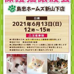 6月13日(日)おーあみ避難所譲渡会in新山下