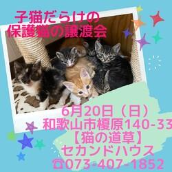 子猫だらけの【猫の道草】&【NPO法人WITHDOG 】保護猫の譲渡会