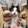 急募!動物病院保護の子猫