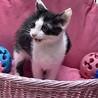 急募!動物病院保護の子猫 サムネイル2