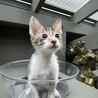 急募!動物病院で保護中の子猫 サムネイル2