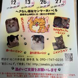 保護猫の譲渡会(ねこの歩添道さんの主催の譲渡会) サムネイル1