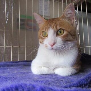 保護猫のアーちゃん 2才の男の子です