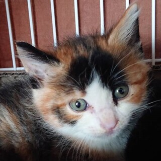 超美猫のリリーちゃん