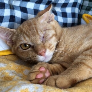 ハンディ猫:片目だけど負けないよ♪ルースくん