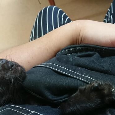 気づくとポッケの中で寝ちゃいます(ФωФ)