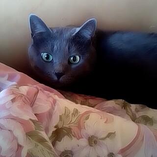 成猫5歳の優しいオス猫さんの里親募集デス✨