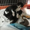 2匹同時に飼って下さる方限定‼️ 2ヶ月弱 子猫