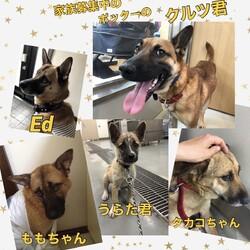 「下津井犬クイズ?!」サムネイル2