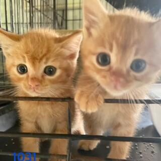 cat-M1031/32兄妹・可愛過ぎ♪