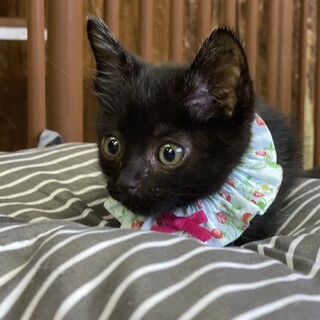 生後1ヶ月半の男の子、黒猫