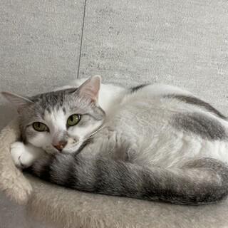 もちもちな白猫ちゃん