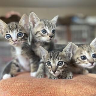 倉庫で生まれた4匹の子猫達!生後1か月!