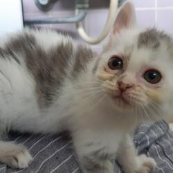 「仔猫を2回目の動物病院へ!」サムネイル2