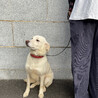 大型犬 雑種♀3~4歳くらい?