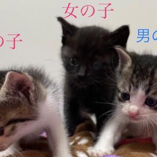 子猫3匹里親様募集!!