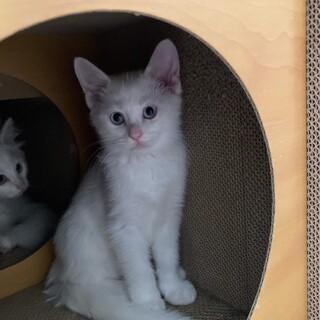 白猫くん 1