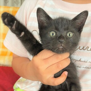 黒猫の人懐こい男の子 生後1か月くらい フータ君