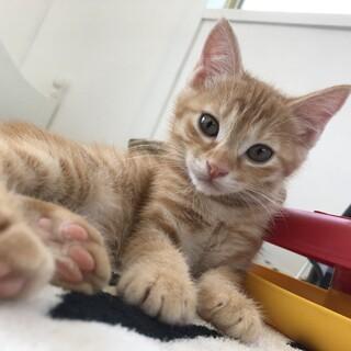 美猫4兄妹♡モモちゃん