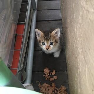 生後一か月の子猫です。