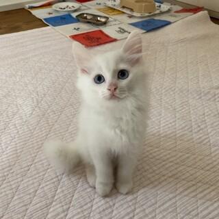 白猫くん 2