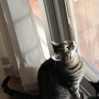 急募!人懐っこい成人猫です。