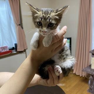 生後1ヶ月半位のイケメン子猫
