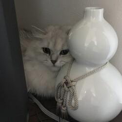 白猫と白瓢箪