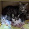 YVWXY28母猫とその子猫