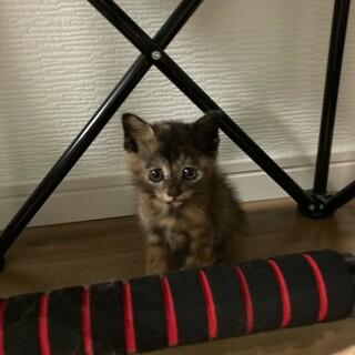 里親さん募集:仔猫(生後~1ヵ月)推定メス