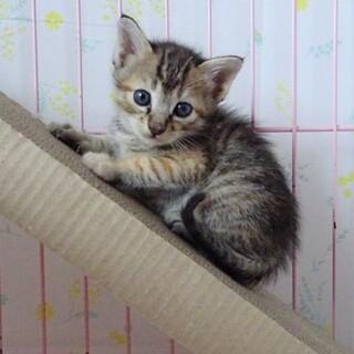 手のひらサイズ 生後1カ月半の子猫達☆