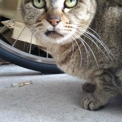「保護に約2年半かかった老猫」サムネイル2