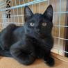 黒猫:くろみつくん