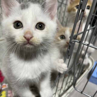 可愛い子猫②ボタンくん